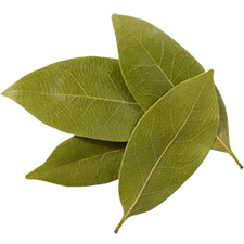 Fresh Bay Leaves